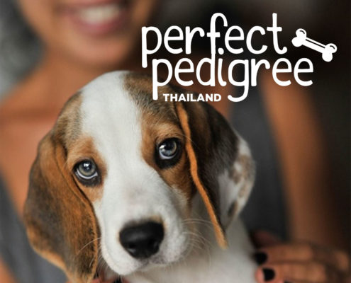 Perfect Pedigree Logo